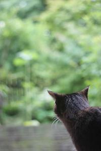 ちょっと岩手へ - 小さな森のキキとサラ