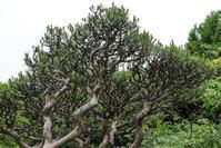 樹の形 - memory