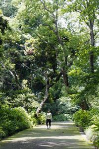 本日、夏至です。これから、陽は短くなります。新宿御苑でルンルンしよう! - 設計事務所 arkilab