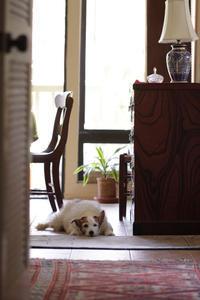 見られている - クローバーのLife is cozy