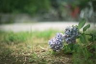 紫陽花 - 気の向くままに…