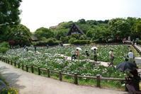 宮地嶽神社の花菖蒲 - 信仙のブログ