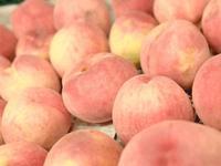 桃の予約販売のお詫び - 自然栽培 果樹カナン