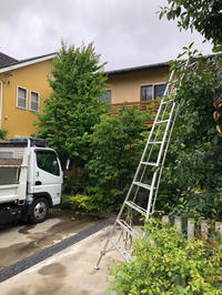 目隠し植栽 - 三楽 sanraku 造園設計・施工・管理 樹木樹勢診断・治療