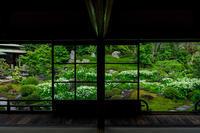 半夏生の庭・前編(建仁寺塔頭両足院) - 花景色-K.W.C. PhotoBlog