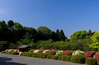 ツツジのライン(隨心院) - 花景色-K.W.C. PhotoBlog