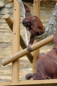 バレンタインさん - 動物園に嵌り中