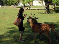 鹿せんべい 鹿と私 - Blue Planet Cafe  青い地球を散歩する