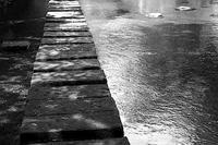 雨月 寫誌 ⑯ 置き石に戯れるヒカリトカゲ - le fotografie di digit@l