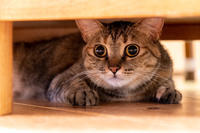 イッちゃん、テーブルの下 - 猫と夕焼け