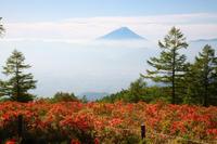 甘利山のレンゲツツジ 3 - 日本あちこち撮り歩記