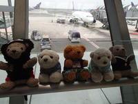 cub bears on travel - cafe mahina
