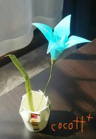 折り紙を贈り物に - cocott+