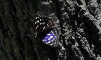 2018梅雨の中休み - 紀州里山の蝶たち