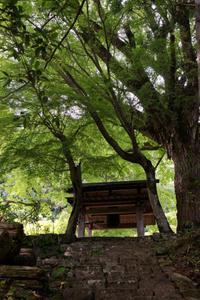 初夏の山寺 - katsuのヘタッピ風景