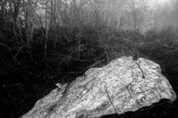ミラーレス - ナンちゃんの天然色写真&白黒写真