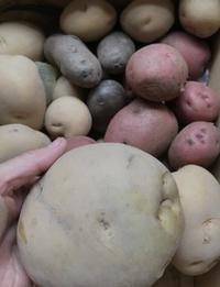 デッカイじゃが芋とツバメの新居作り - 島暮らしのケセラセラ