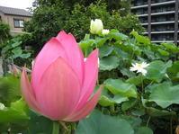 横田蓮園へ - 大塚婉嬢-中国語と書のある暮らし‐