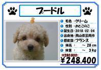 子犬の販売価格DOWN! - ペットケアタウン ブログ