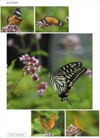 花と蝶 2018 - ひとりあそび