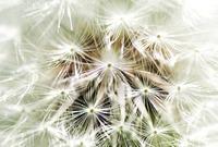 梅雨空の珊瑚 - ぼんぼんトントン 写真