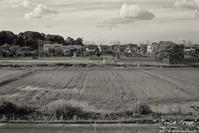 """""""rice crop"""" - ~まきち写真工房~"""