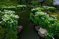 半夏生の庭・後編(建仁寺塔頭 両足院) - 花景色-K.W.C. PhotoBlog