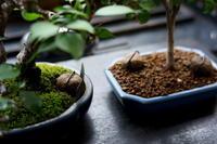 盆栽の肥料 / 独り言 - レンズの記憶