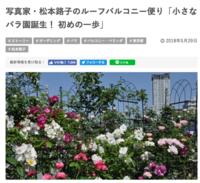 「Garden Story」写真家・松本路子のルーフバルコニー便り - 駒 場 バ ラ 会 咲く 咲く 日 誌