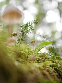 雨の森のきのこ - tokoya3@