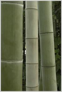 向島 -46向島百花園 - Camellia-shige Gallery 2
