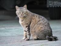 偉大な母猫 - gin~tetsu~nosuke