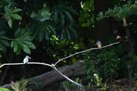 上野動物園で見られる野鳥 - Buono Buono!