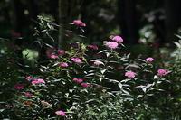 赤城自然園、梅雨の花 - 上州自然散策2