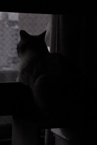 雨降り - ぎんネコ☆はうす