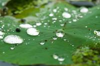 雨あがり(松山総合公園) - かたくち鰯の写真日記2