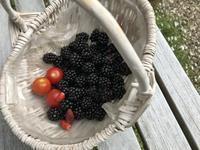 ブラックベリーの収穫 - 小さな花アトリエ