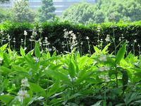 初夏の草木花@日比谷公園 - AREKORE