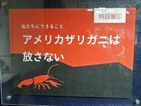 井の頭自然文化園・水生物館特設展示「アメリカザリガニは放さない」【前編】 - 続々・動物園ありマス。