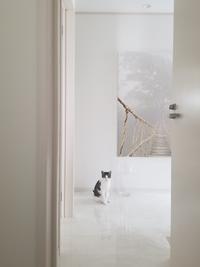 今朝の白い玄関ホールとねこ - ねことおうち