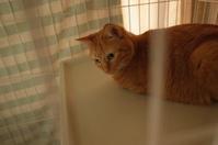 猫のテンションが高い日 - もるとゆらじお