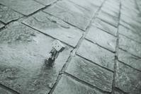 ✿雨上がり - ✿happiness✿