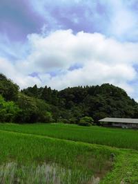 青空が広がりました - 千葉県いすみ環境と文化のさとセンター