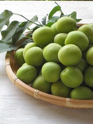梅の収穫~梅シロップ & 自家製黒にんにく - Cache-Cache+