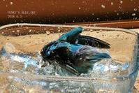 水浴びB.Bの記録→(6月いろいろ・・) - FUNKY'S BLUE SKY