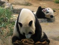 上野動物園の名湯 いい湯だなぁ - 動物園のど!