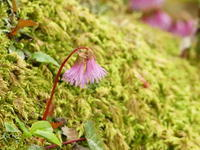 苔の森の花々 - tokoya3@