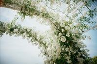 White rose arch - Amana Films