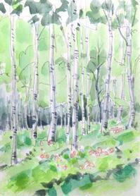 八千穂高原 白樺自然林 - ryuuの手習い