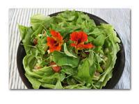新鮮サラダ - 雪割草 - Primula modesta -